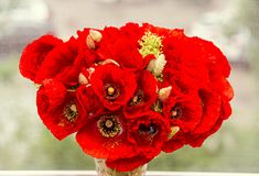 Bouquet of red wild flowers of Papaver rhoeas, corn field poppy Stock Images