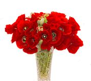 Bouquet of red wild flowers of Papaver rhoeas, corn field poppy Royalty Free Stock Photo