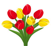 Bouquet of red and yellow tulips. Vector. Stock Photo