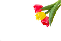 Bouquet of red and yellow tulips.  Royalty Free Stock Photo