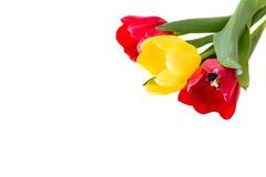 Bouquet of red and yellow tulips.  Royalty Free Stock Photography