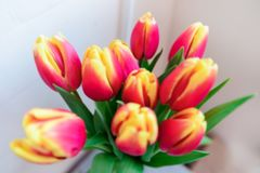 Bouquet red and yellow tulips. Defocused background stock photos