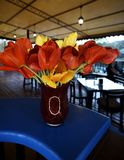 A bouquet of red and yellow tulips in a vase on the bar royalty free stock photo