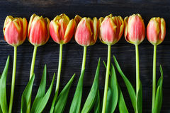Bouquet of red and yellow tulips Royalty Free Stock Photos