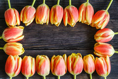bouquet of red and yellow tulips Stock Photos