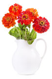 Bouquet of red zinnia flowers Royalty Free Stock Images