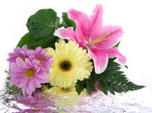 Bouquet with reflection Royalty Free Stock Photo