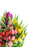 Bouquet of resh spring tulip flowers Royalty Free Stock Photography