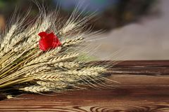 Bouquet of ripe Golden wheat heads and red poppy flower lying on. Wooden table stock photos