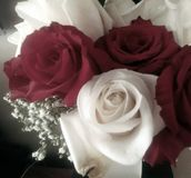 Bouquet rose amorti Photo stock