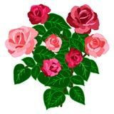 bouquet rose d'isolement sur le fond blanc Image libre de droits