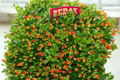 Bouquet rose de jet orange Image libre de droits