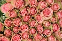 Bouquet rose de Rose photographie stock