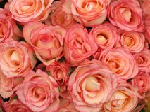 Bouquet rose de roses Images stock