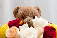Bouquet of Rose Flowers with a Teddy Bear in the Background Close Up Stock Photos