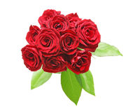 Bouquet of rose Stock Image