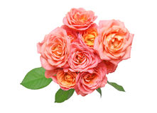 Bouquet of rose Stock Images