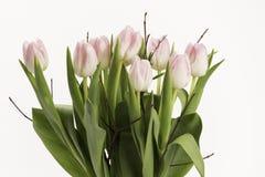 Bouquet rose sensible des tulipes Photos libres de droits