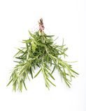 Bouquet of Rosemary. On white background Royalty Free Stock Images