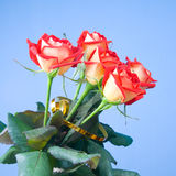 Bouquet of roses Stock Photography