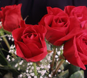 Bouquet of Roses. Close up of a bouquet of red roses Royalty Free Stock Photo