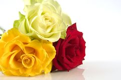 Bouquet roses. Three roses isolated one a white background Royalty Free Stock Photography