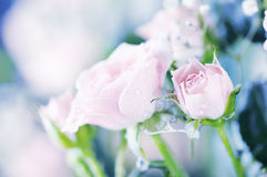 Bouquet of roses. Stock Image