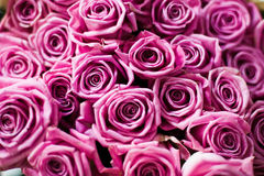 Bouquet of roses. Focus on middle roses Stock Image