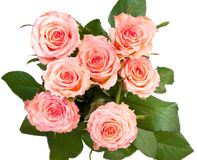 A bouquet of roses Royalty Free Stock Image