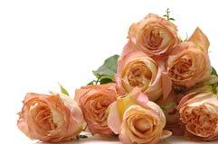Bouquet  roses Stock Photos