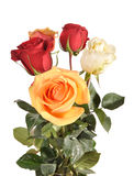 Bouquet with roses. Bouquet with multi-coloured roses Royalty Free Stock Photo