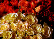 Bouquet of roses. Bouquet of red an yellow roses Stock Photos
