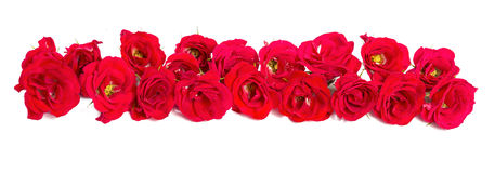 Bouquet of roses arranged to form of a border or design element for floral themes Royalty Free Stock Photography