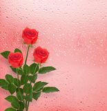 Bouquet of roses on the background of a window with raindrop Stock Image