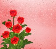 Bouquet of roses on the background of a window with raindrop Stock Photos
