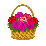 Bouquet of roses in the basket. Isolated on white background Royalty Free Stock Photos