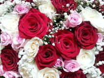 Bouquet of roses. Beautiful rose bouquet for birthday stock photo
