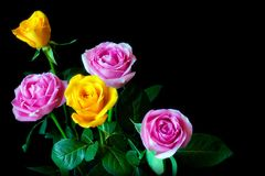 Bouquet of roses. On a black background Royalty Free Stock Images