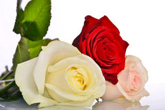 Bouquet of roses that bloom. Bouquet of roses bloomed, white, pink, red Stock Photos
