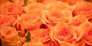 Bouquet of roses. Bouquet of bright orange roses Royalty Free Stock Images