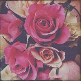 Bouquet of roses. Bunch of pink and white roses Royalty Free Stock Photos