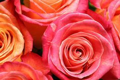 Bouquet of roses. Close-up image of bouquet of roses for Valentine's day Royalty Free Stock Image
