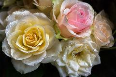 Bouquet of roses. Close-up of pastel bouquet of roses. Macro photography of nature Stock Photography
