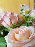 Bouquet of roses and daisies on the background of a wooden wall, close-up stock image