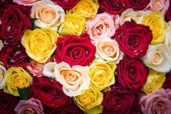 Bouquet of roses with dew drops Stock Images