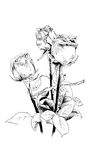 A bouquet of roses, drawn in ink by hand Royalty Free Stock Photography