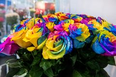 A bouquet of roses of exotic multi colors. Chameleon flowers with colored petals at the edges. Stock Photos