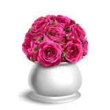 Bouquet of Roses in Flowerpot Festive Congratulation Concept Iso. Lated on White Background Royalty Free Stock Photography