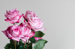 Bouquet of roses. Bouquet of  fresh pink roses on uniform background Stock Photography