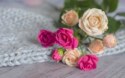 A bouquet of roses on a gray background of tender merino wool and wood Stock Images